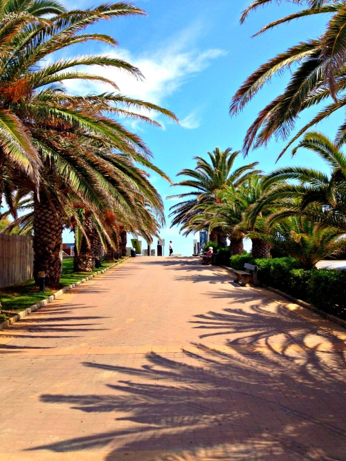 Sete palm trees.jpg