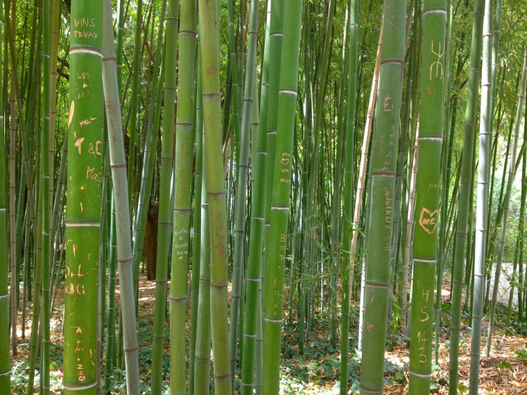 MMontpellier bamboo