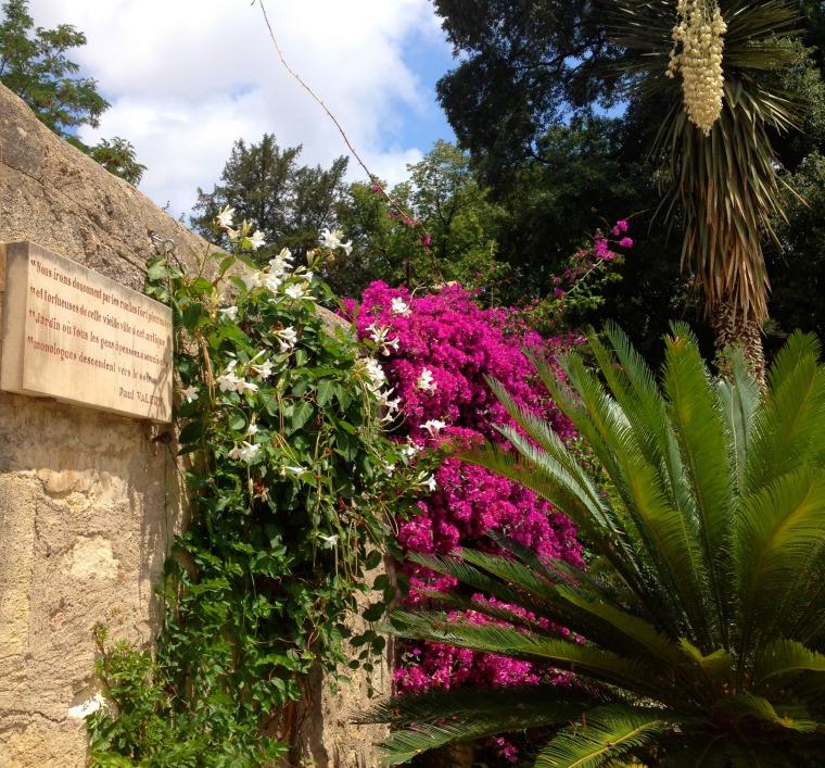 MMontpellier jardin des plantes