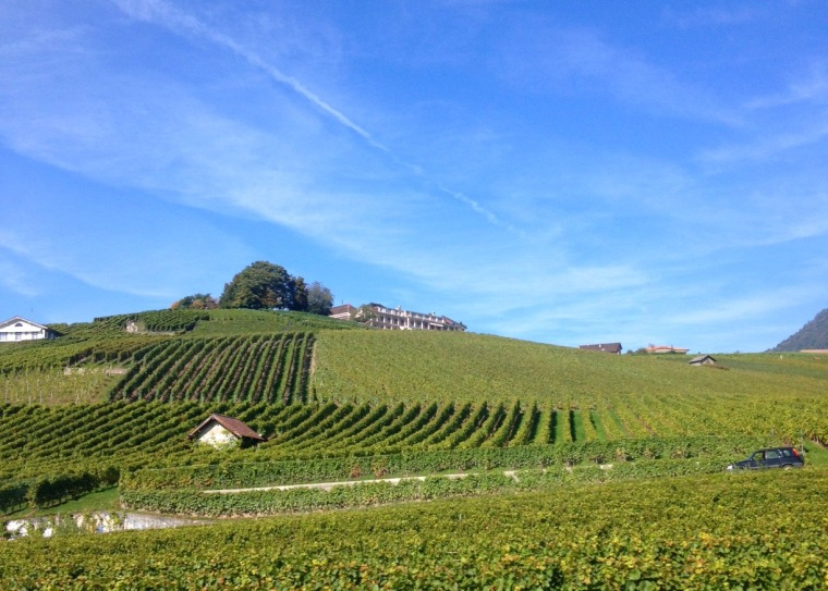 Vevey vineyards 2