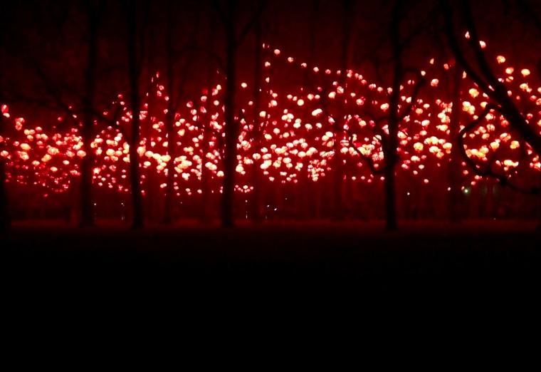 Fete des lumieres tree silhouettes