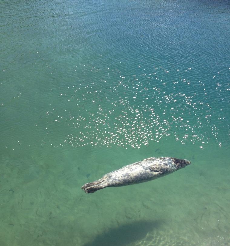 Seal Santander