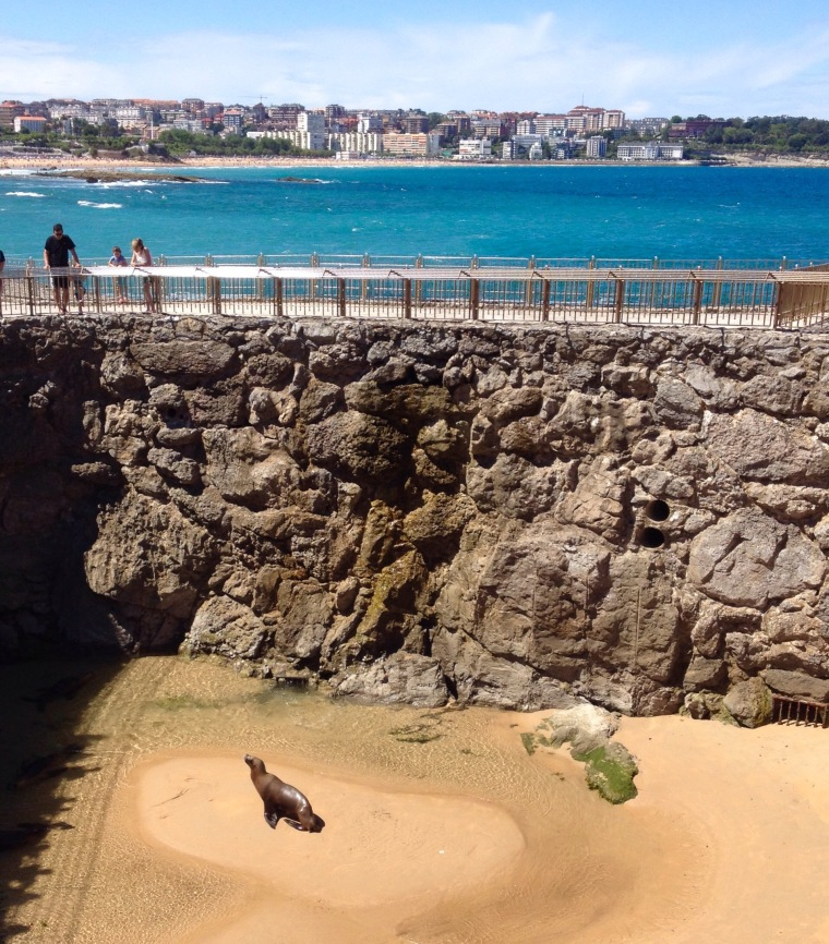 Sea lion Santander